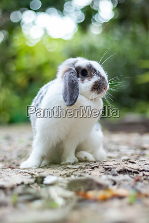 rabbits that are white and black