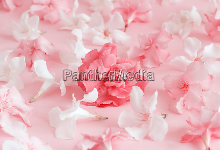 pink flowers on light pink background