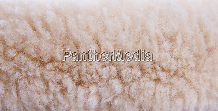 fur closeup