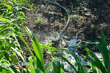 irrigation system in the garden