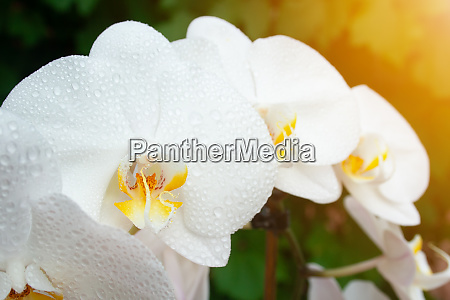 white orchid with drops