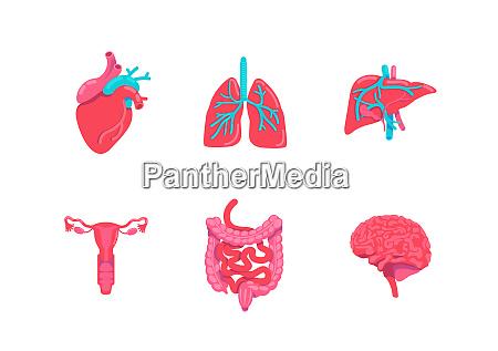 human body anatomy parts flat color