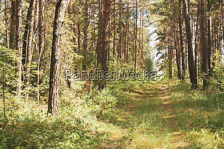 summer green beautiful forest landscape