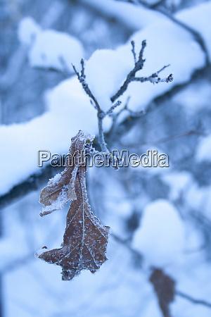 brown old oak leaf covered