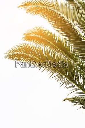 sun over green palm leaves tropical