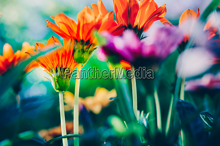 colorful flowers close up in the
