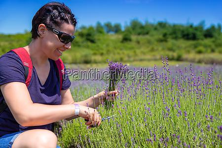 woman gather lavender flowers