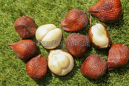 salak pondoh is one of the