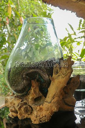 natural coffee arabica beans in a
