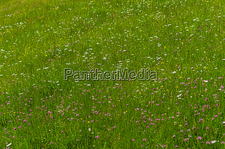 fresh grass and many flowers