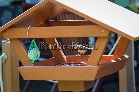 a bird feeder visited by a