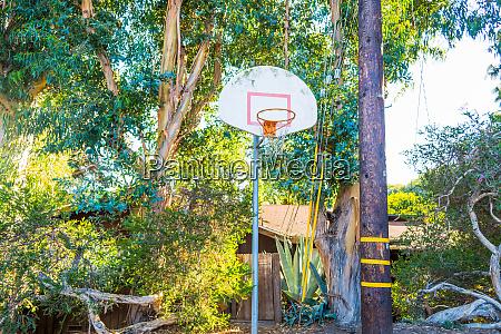 basketball hoop in a tropical yard