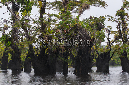 dead trees with bromeliads