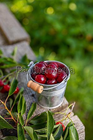 delicious sour cherries