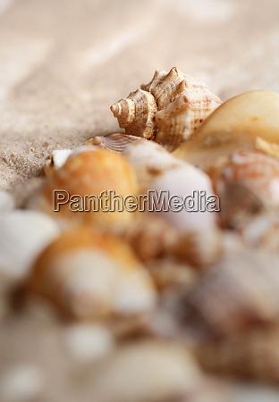 marine elements closeup seashells and starfish