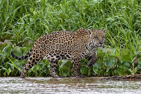 brazil pantanal 2019 22374