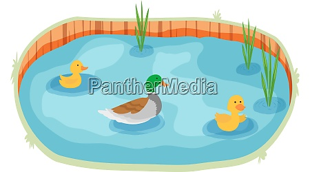 aquatic animals are floating in a