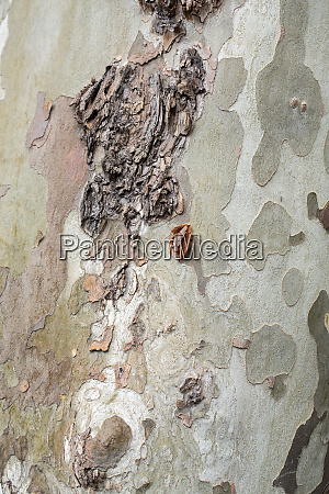 bark and trunk of a