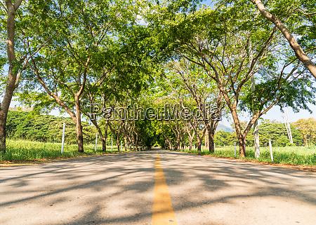 roads asphalt with tree tunnel