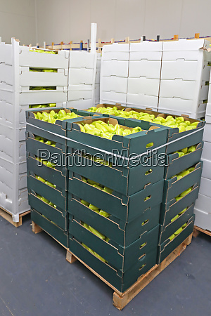 green peppers pallet