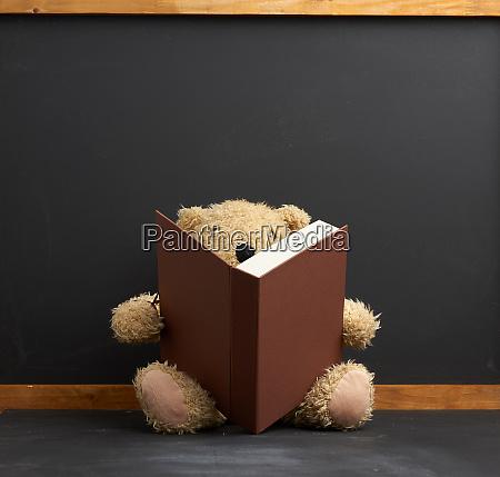 brown teddy bear sitting with a