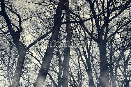 horror foggy trees silhouettes wallpaper halloween