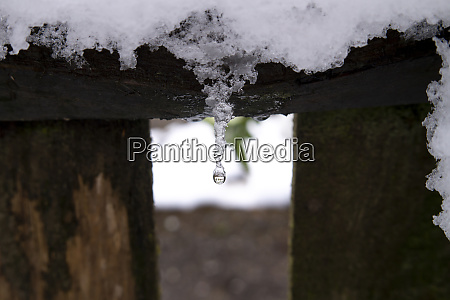 melting icicle and fresh snow on