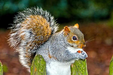 squirrel eat