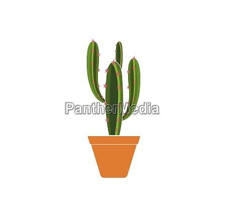 cactus icon logo template vector illustration
