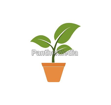 plant in pot icon logo vector