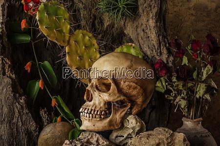 still life with a human skull