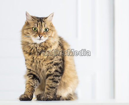 relaxed domestic cat at home