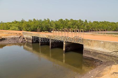 old african bridge