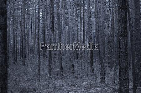 dark blue forest