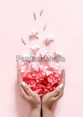 hands full of pink flowers on