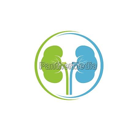 kidney icon vector illustration design