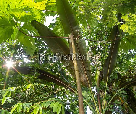 sunny vegetation