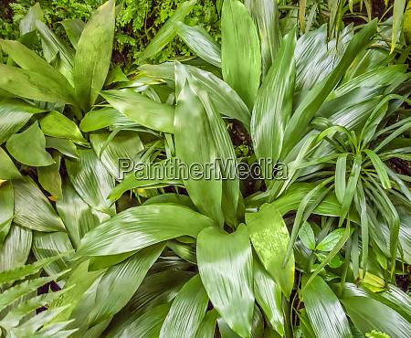 flourish vegetation
