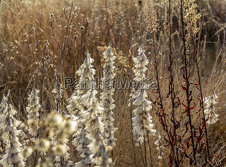 arid vegetation closeup