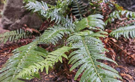 wet fern leaves