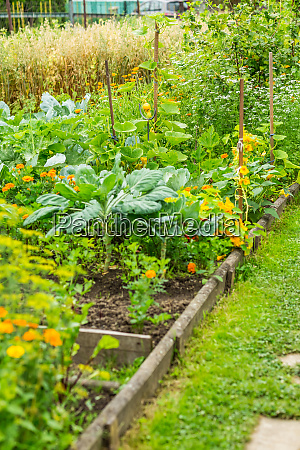 kitchen garden with vegetables herbage and