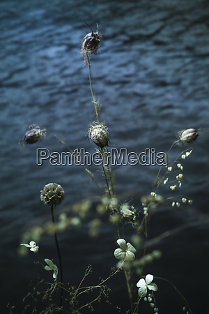 tranquil spiky plant and flowers