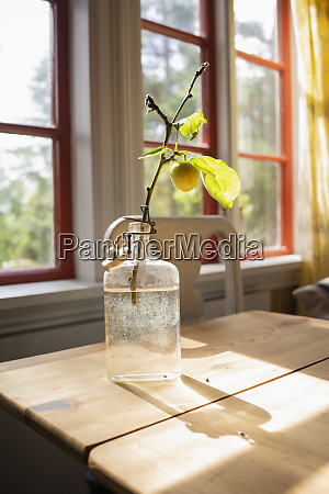 yellow cherry plum growing on small