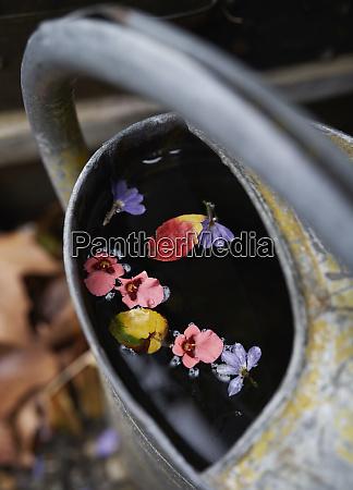 flower petals floating on water in