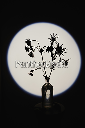 silhouette spiny plant in glass bottle