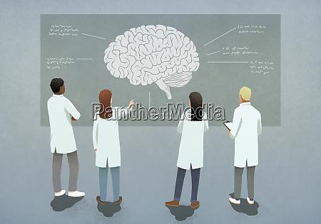 scientists discussing brain diagram