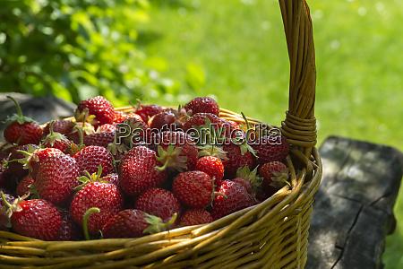 rustic wicker basket with juicy ripe