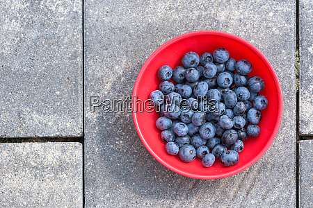 top view of blueberries in a