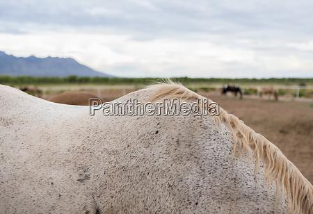 detail of horses mane