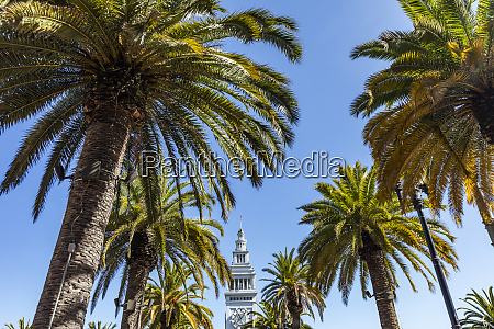 usa, , california, , san, francisco, , palm, trees - 28728722